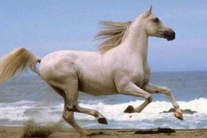 Dostihy a sázky: Proč všichni chtějí koně Napoli?